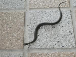ヘビの子-2.jpg