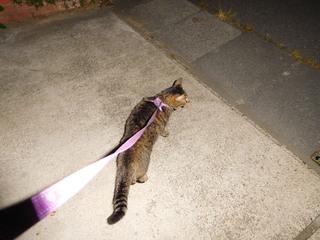 猫散歩.jpg